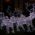 christmas reindeer lights outside in dark