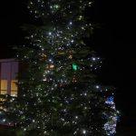 christmas tree outside at night