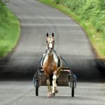 horse and cart on road